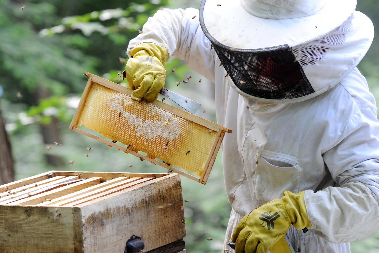 Un apiculteur en montagne bourbonnaise