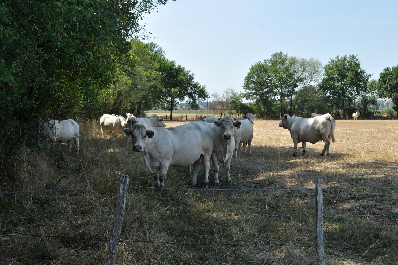 Programme de soutien à l'agriculture du territoire